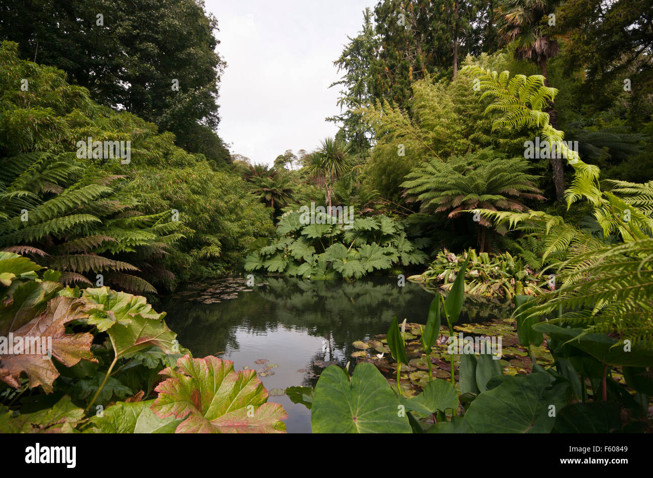 Ferns trees and plants surrounding a pond in the tropical for Garden pond plants uk