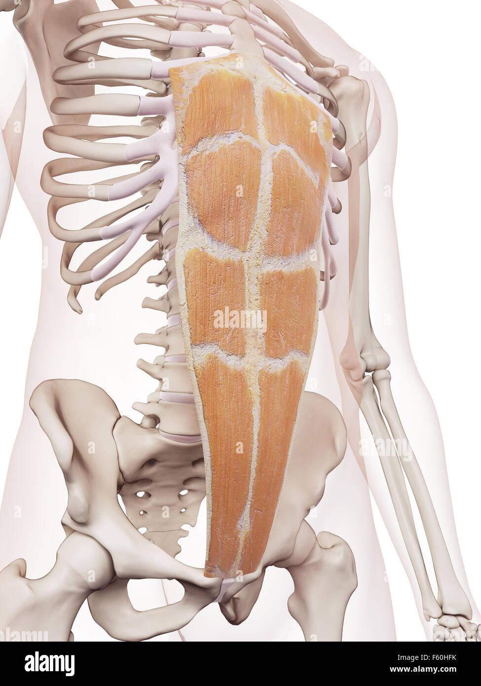 Erfreut Osteomeatal Komplexe Anatomie Ideen - Physiologie Von ...