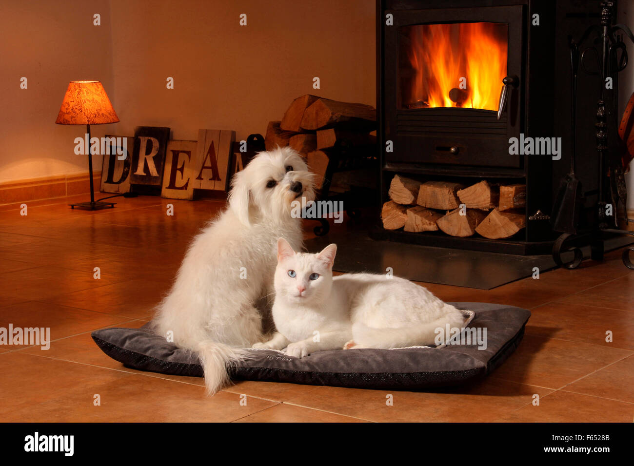 Cat In Front Fireplace Stock Photos & Cat In Front Fireplace Stock ...