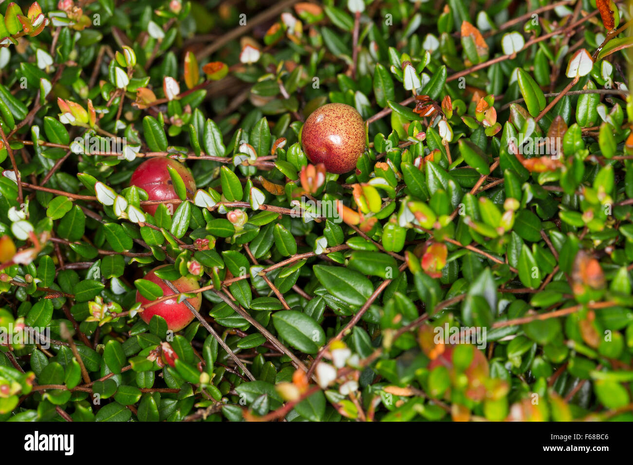 a report of cranberry wilderness Cranberry wilderness monongahela national forest mnf gis staff utm, zone 17, nad 83 july 30, 2006 Å c:/gis_data/projects/brochures/cranberry_wildernessmxd.