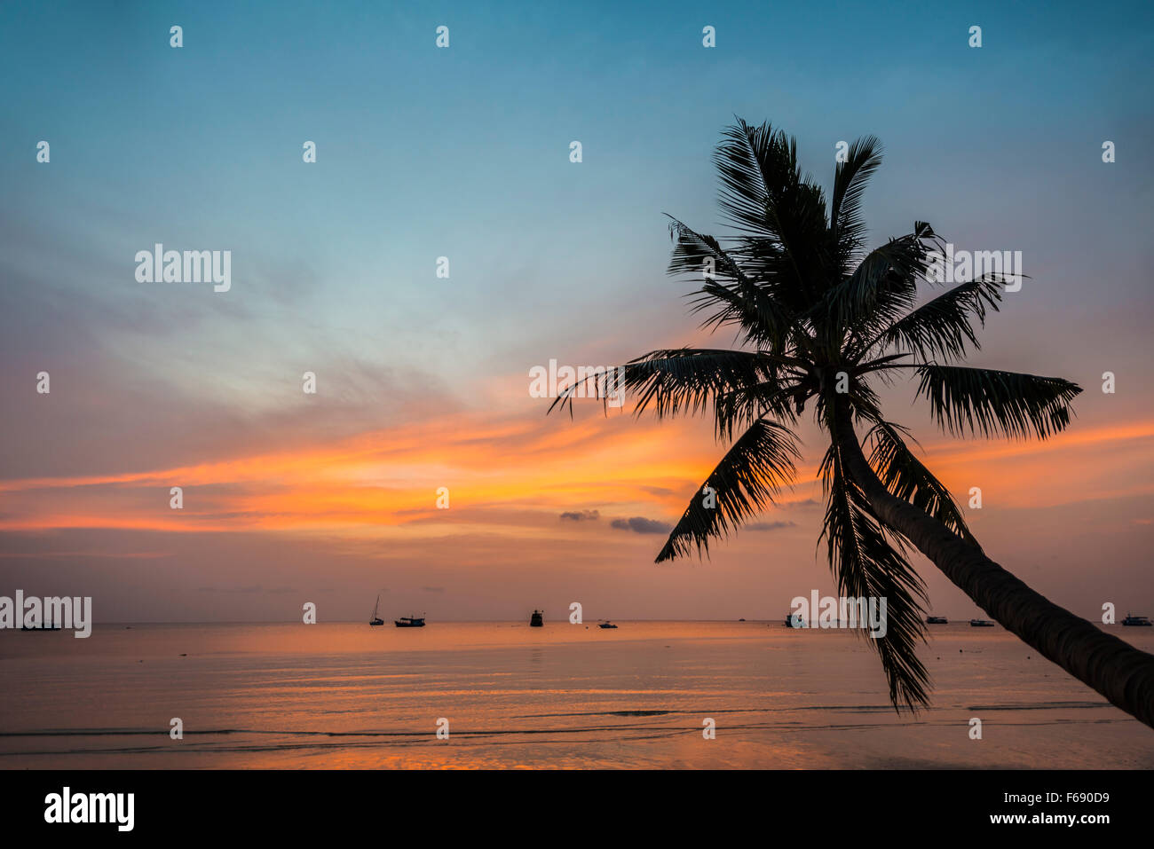 Palm tree at sunset by the sea south china sea gulf of thailand palm tree at sunset by the sea south china sea gulf of thailand koh tao thailand publicscrutiny Images