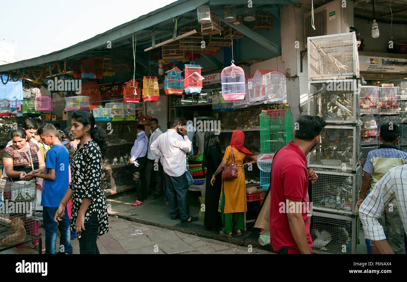 the image of pet shop was taken in crawford market mumbai