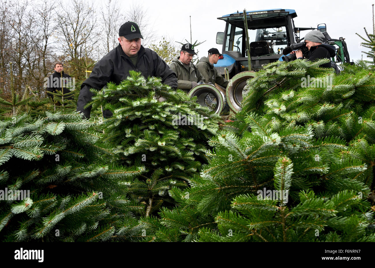 Exceptional Christmas Tree Producers Part - 6: The Christmas Tree Season Has Officially Begun In Schleswig-Holstein. There  Are Around 200 Christmas Tree Producers ...