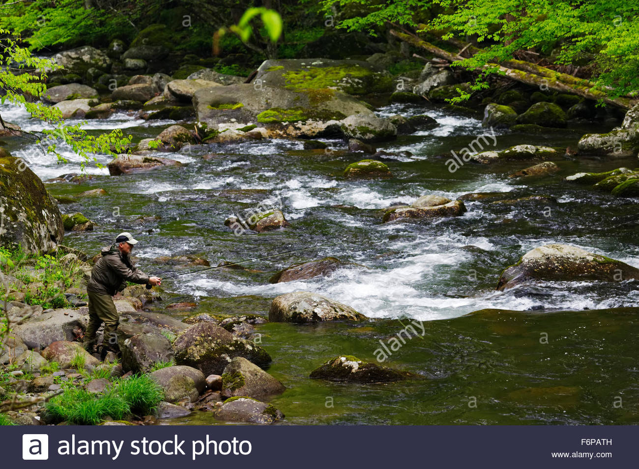 Man fly fishing in the middle prong little river great for Smoky mountain trout fishing