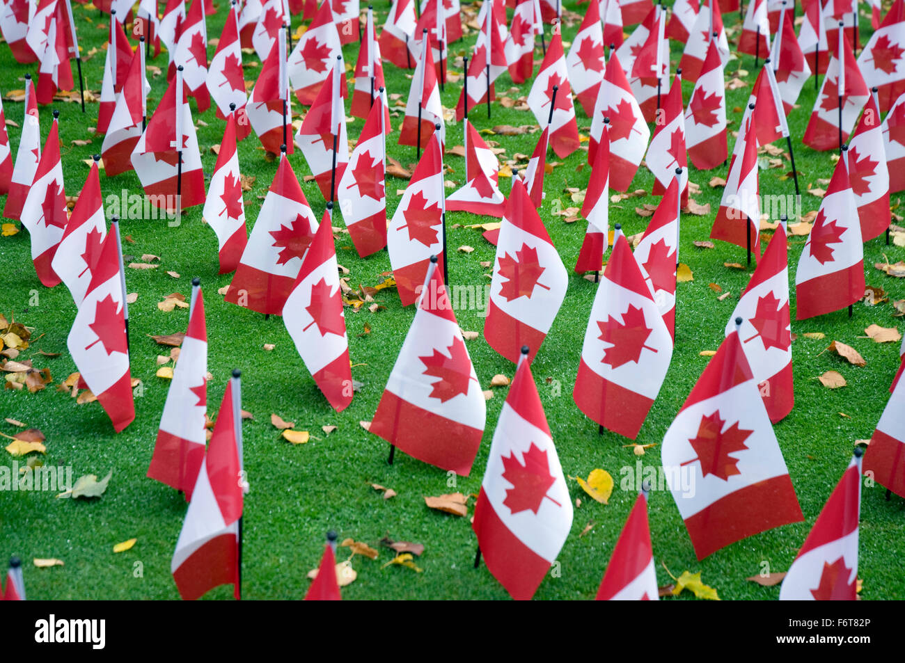 display of small canadian flags for remembrance day 2015 outside