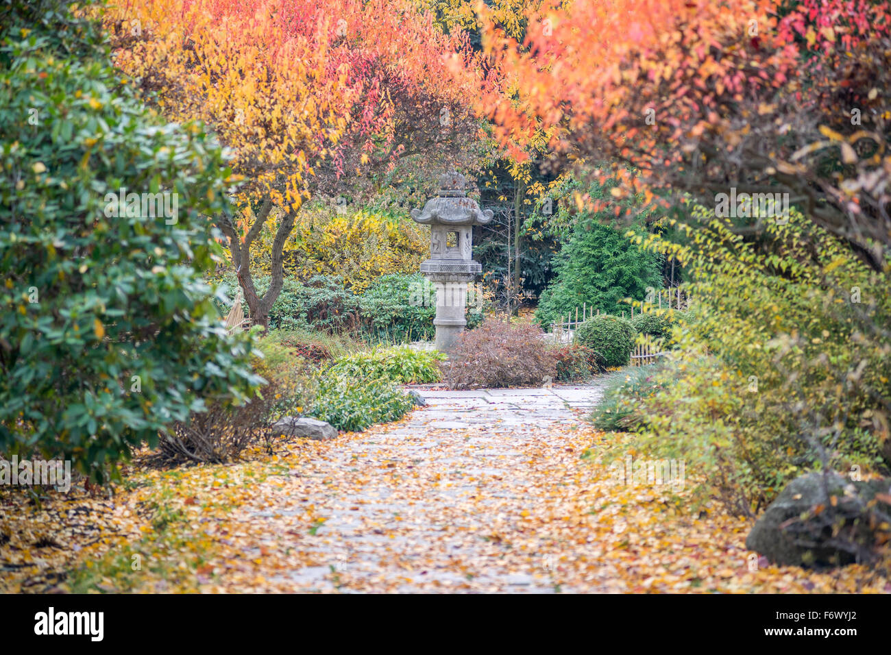 Colorful fall autumn trees Japanese Garden Wroclaw Stock Photo ...