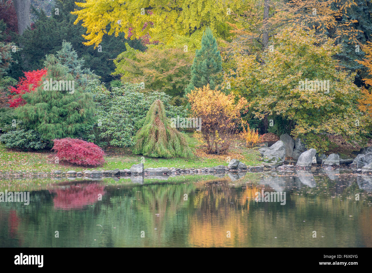 Colorful fall trees and quiet water Japanese Garden Wroclaw in ...