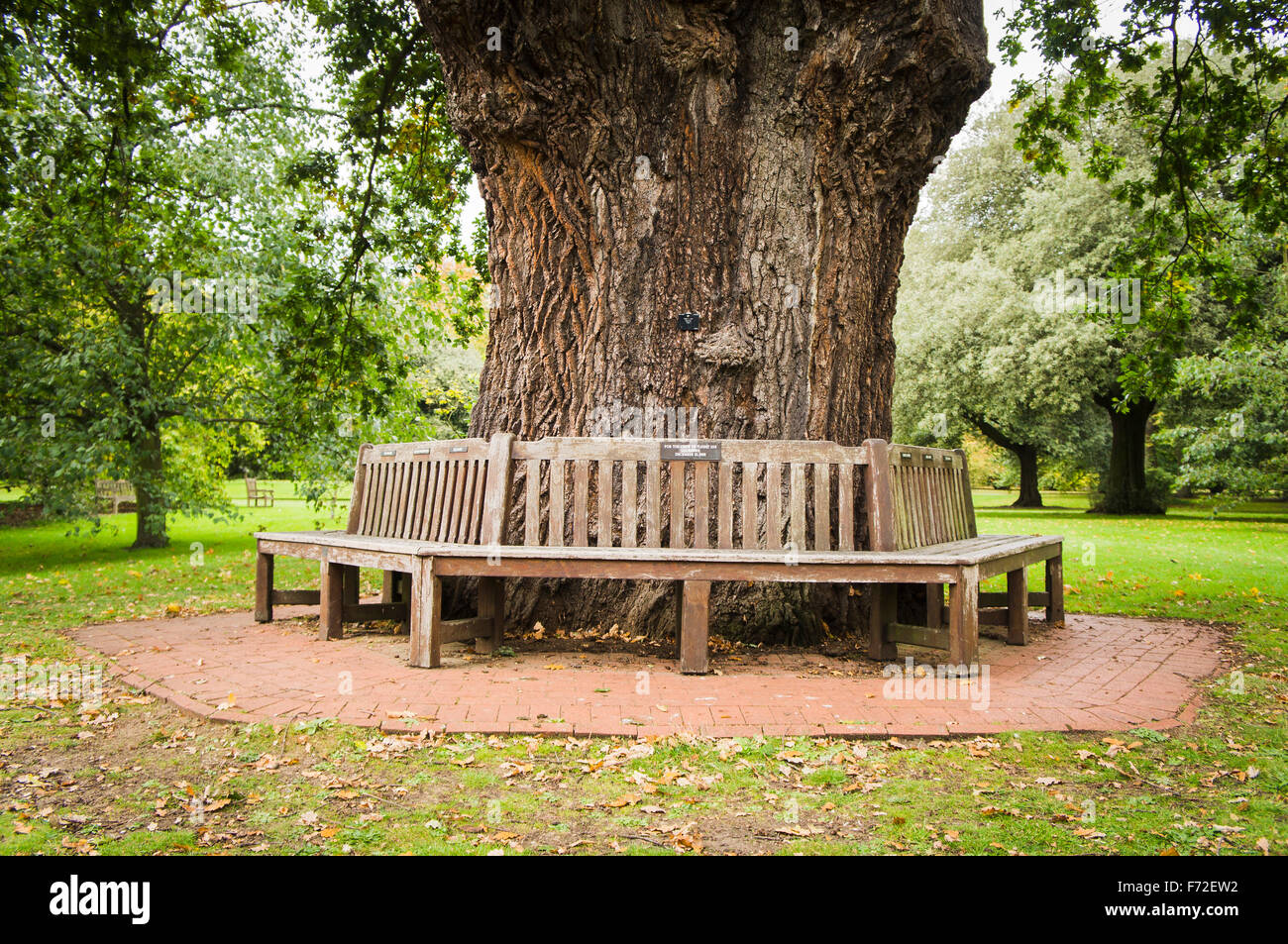 Lockerbie Panam103 In Rememberance Memorial Benches Round Tree Kew Stock Photo Royalty Free