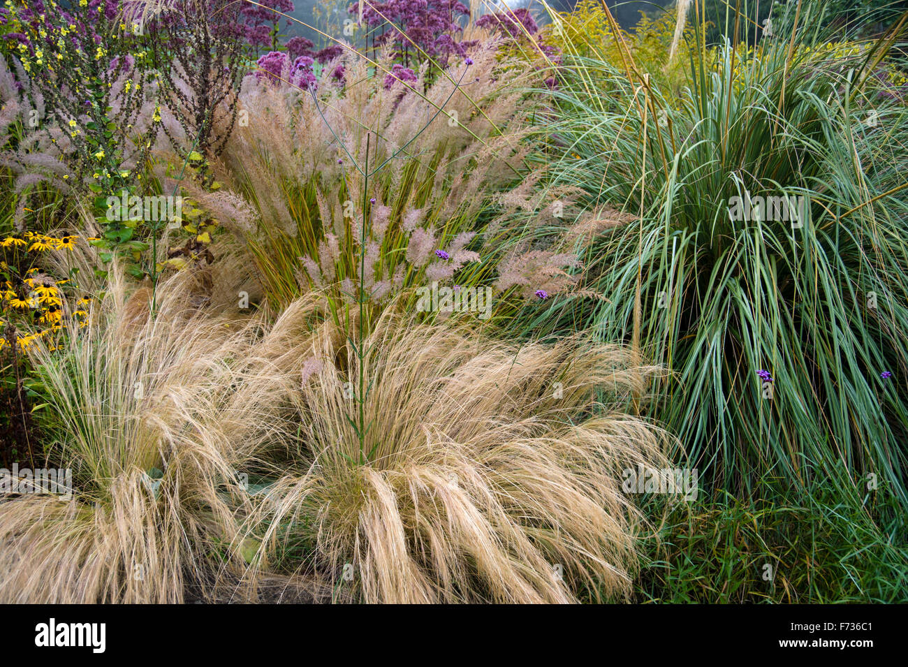 Ornamental grasses in garden border in autumn stock photo for Grasses for garden borders