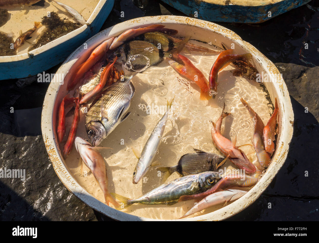 Typical outdoor italian fish market with fresh fish and for Hagen s fish market