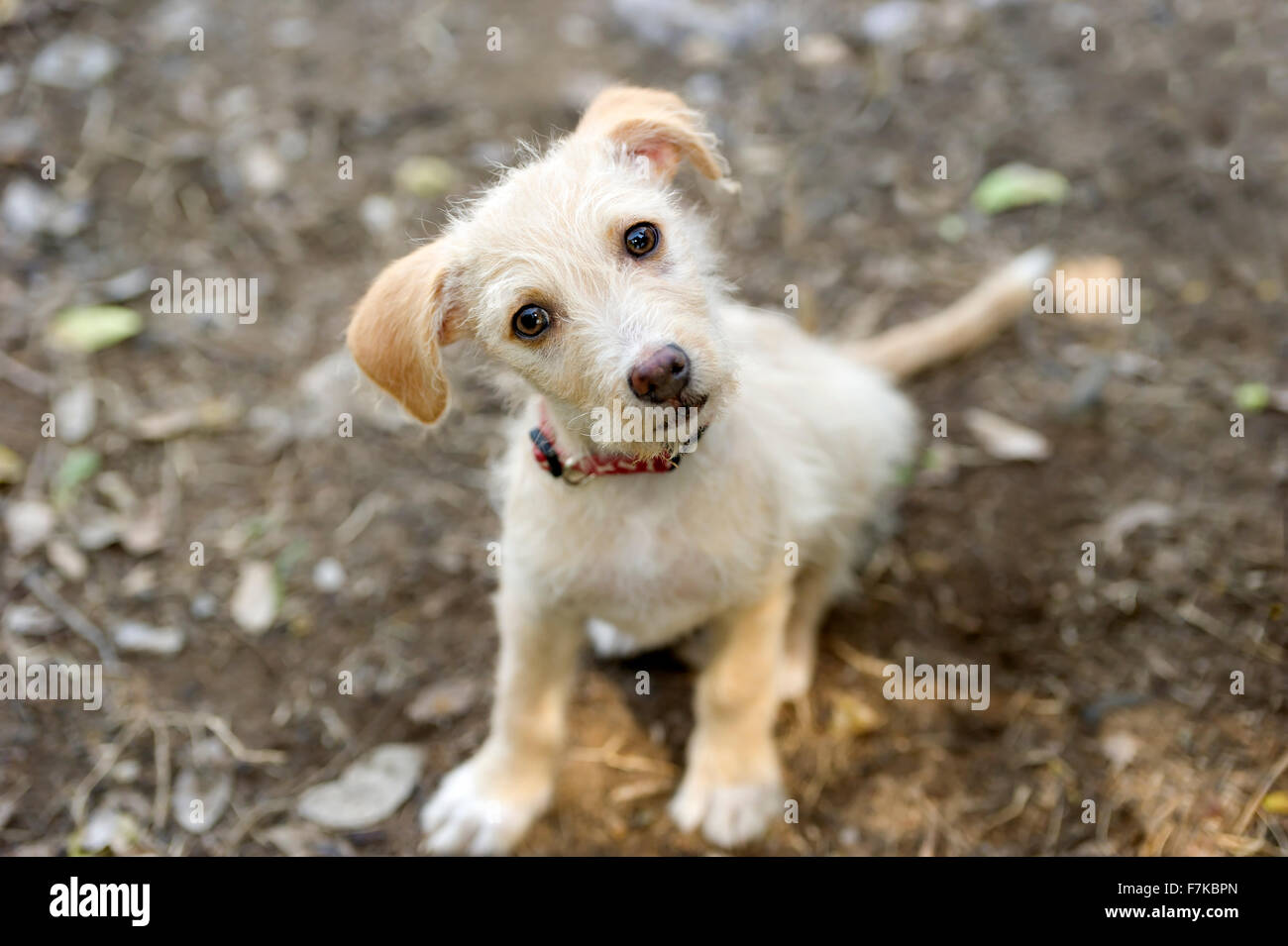 Cute dog is an adorable puppy dog with big brown beautiful eyes