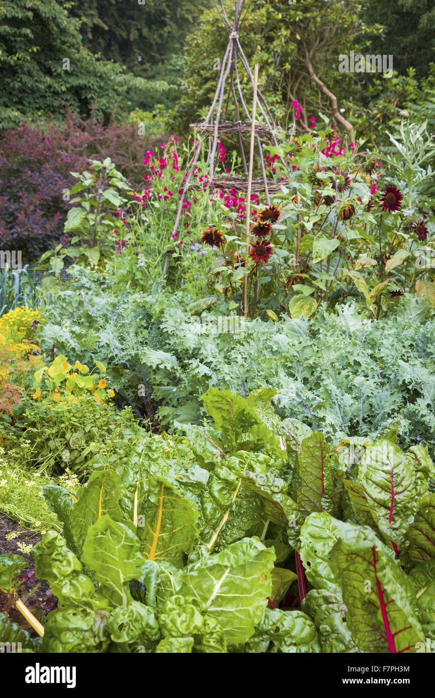 Kitchen Garden Vegetables Flowers And Vegetables Growing In The Kitchen Garden Dunham