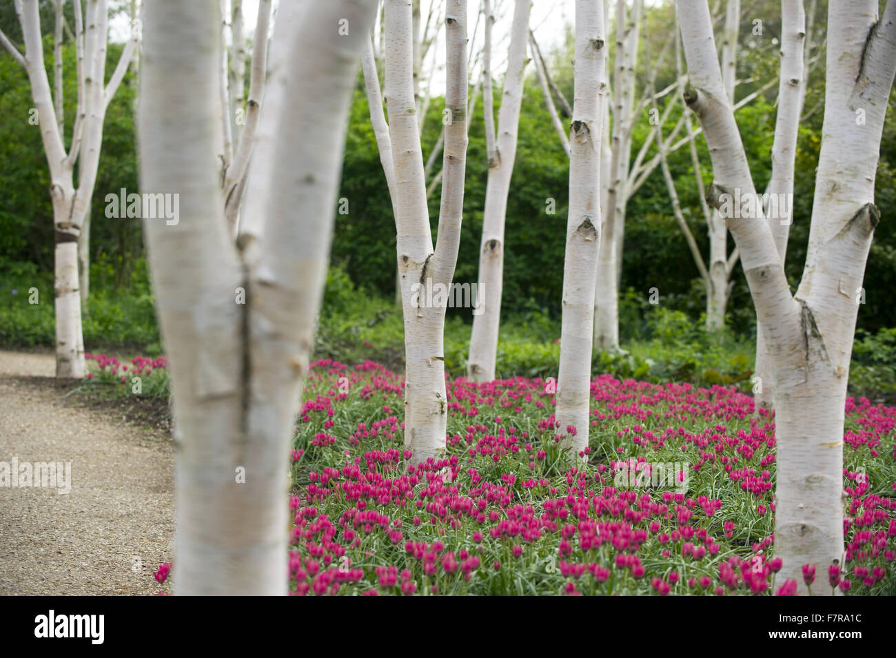 wood in springtime at anglesey abbey gardens and lode mill stock