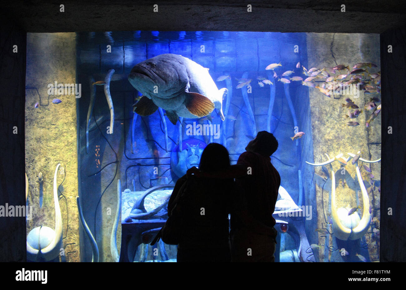 Fish aquarium in uae - Stock Photo Silhouette Of Tourist Couple Looking At A Giant Fish In An Aquarium At Atlantis Hotel Of Dubai Uae