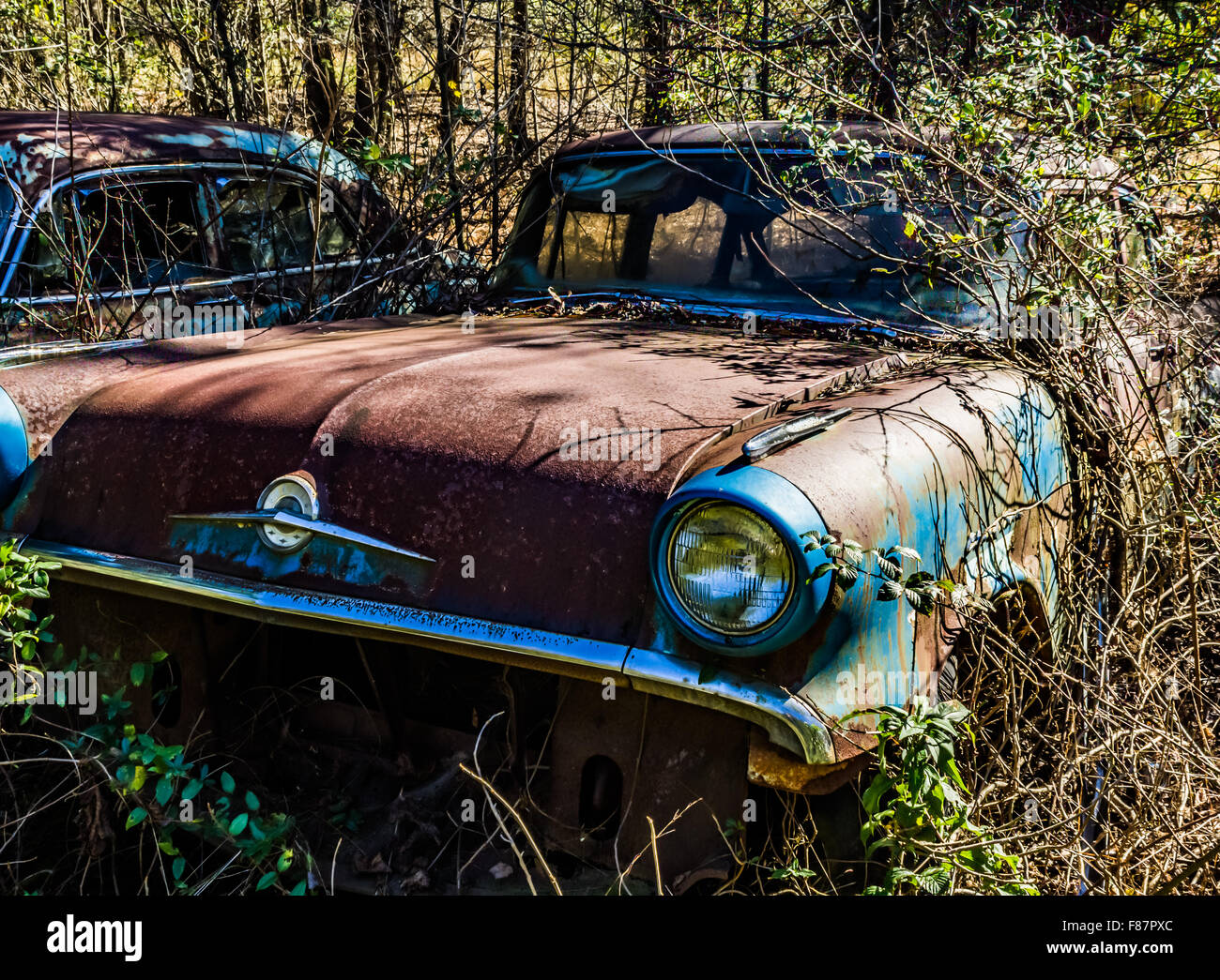 Old, junk cars in the woods Stock Photo, Royalty Free Image ...