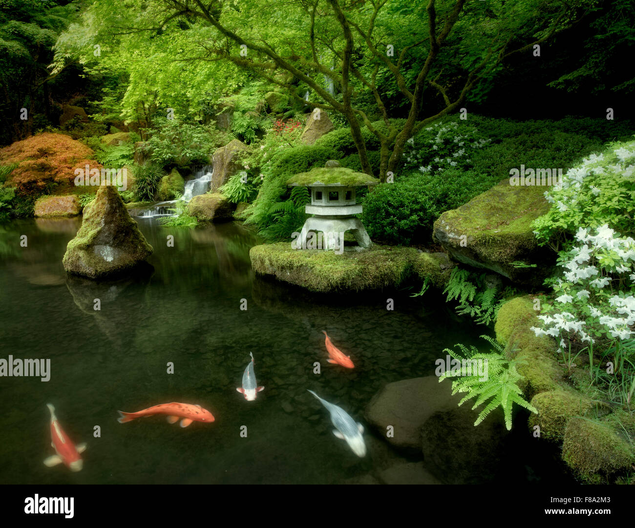 Koi in pond with japanese lantern and waterfalls japanese for Japan koi pool