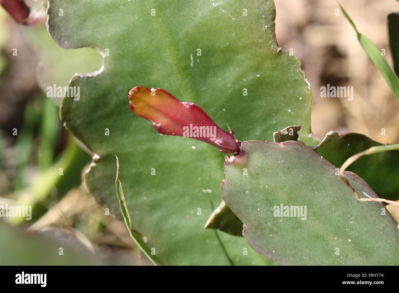A Slender Oncidium Spike