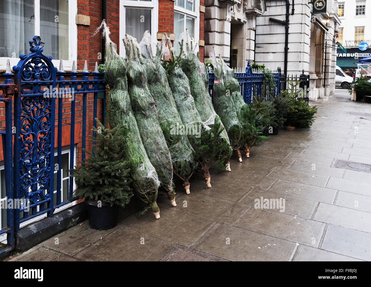 real christmas trees for sale at kiosk bickenhall street marylebone london england - Real Christmas Trees For Sale