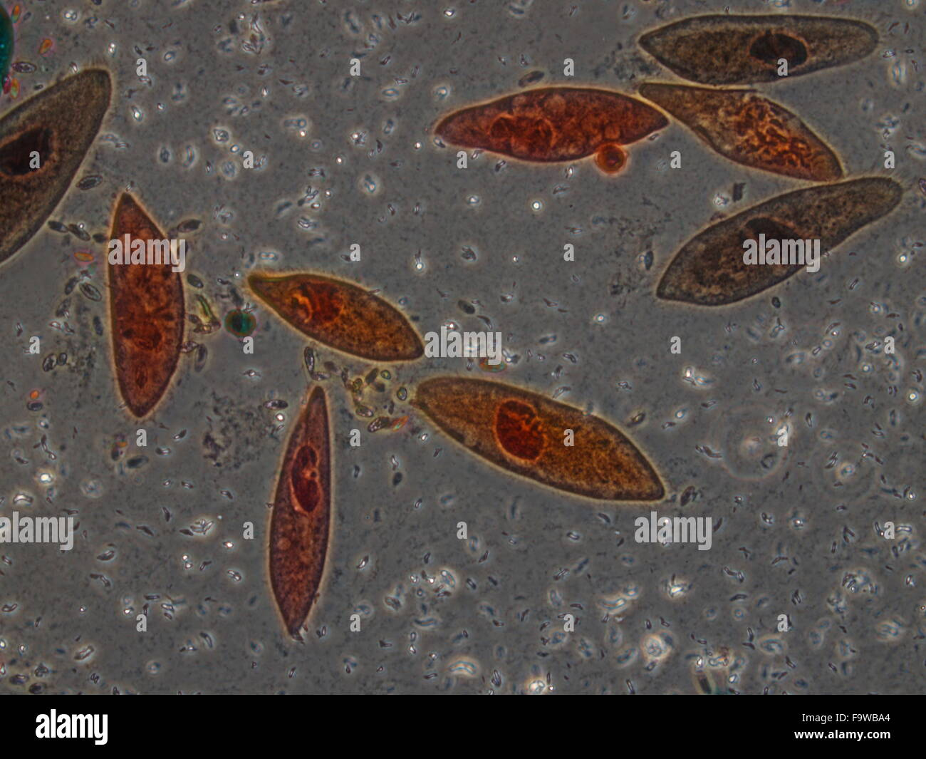 Biological sample cells and bacteria, plant, microb under ...
