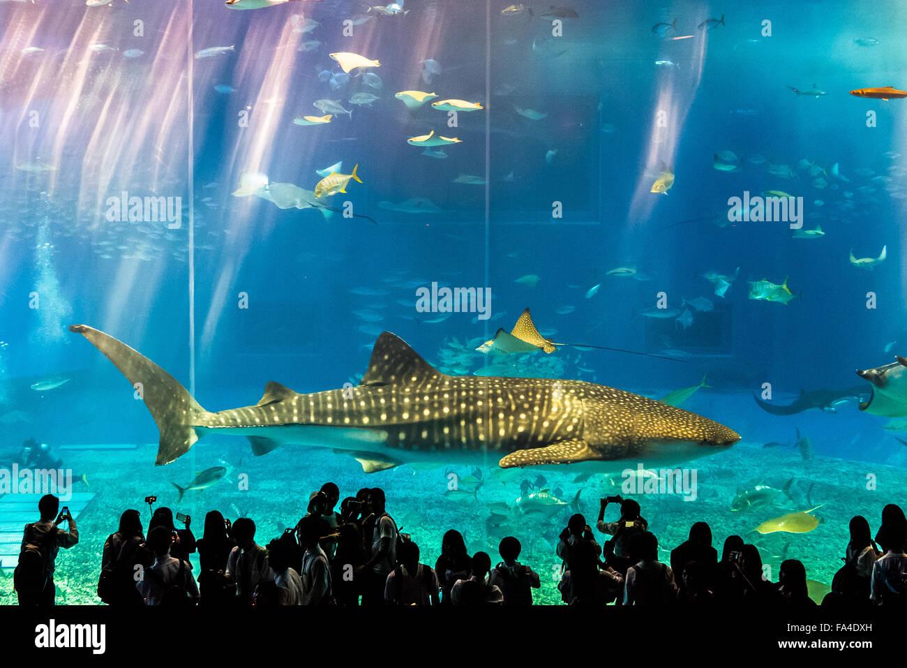 Fish aquarium japan - Whale Shark And Students At The Okinawa Churaumi Aquarium Japan Stock Image