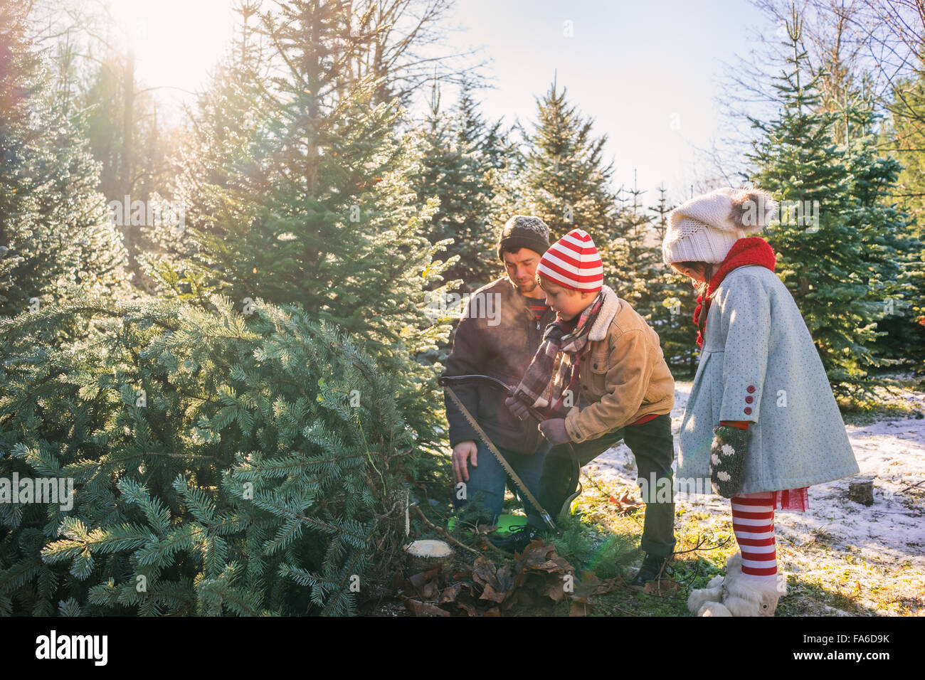 Young boy cutting down Christmas tree with father and sister Stock ...