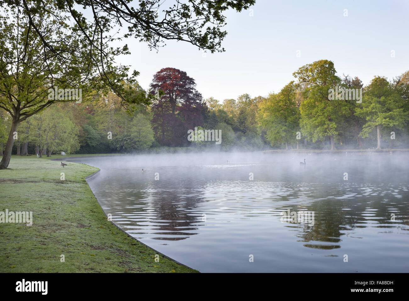 Mist on the lake at claremont landscape garden surrey the lake as mist on the lake at claremont landscape garden surrey the lake as planned by bridgeman in 1715 was circular the present irregular shape was created workwithnaturefo