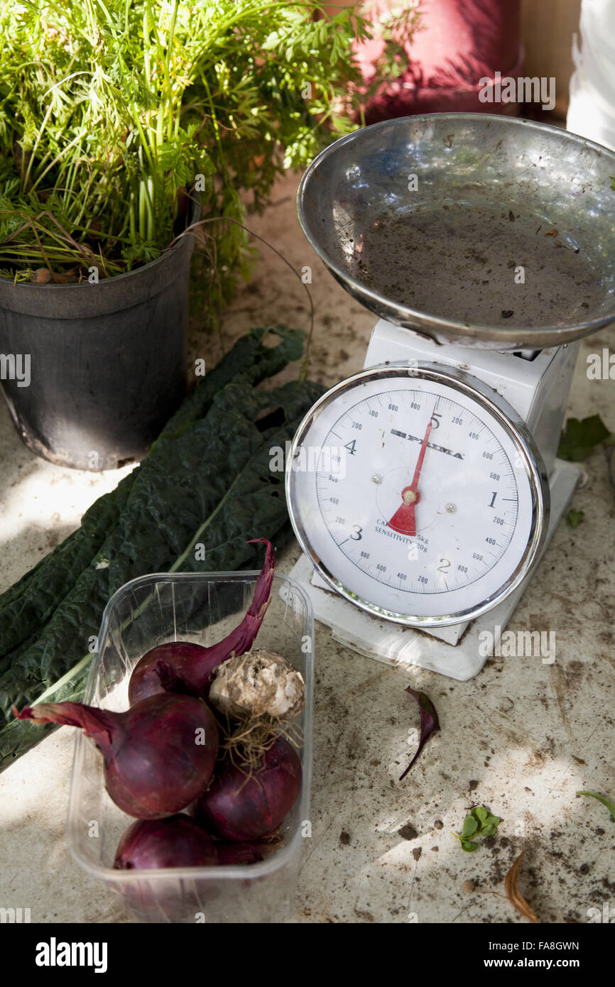 Kitchen Garden Produce Produce And Scales In The Community Kitchen Garden At Hatchlands