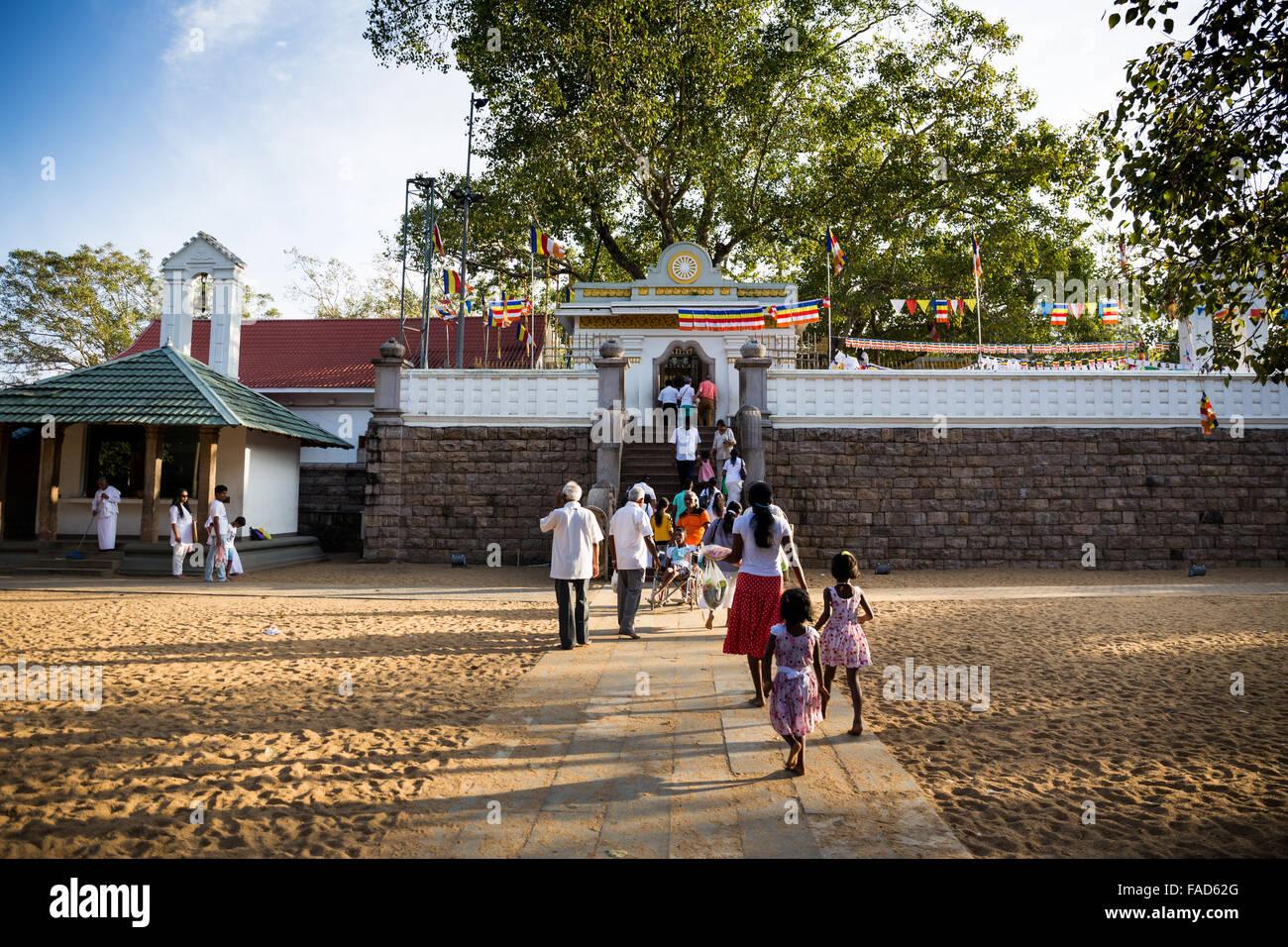 People Praying At Sri Maha Bodhi Sacred Bodhi Tree