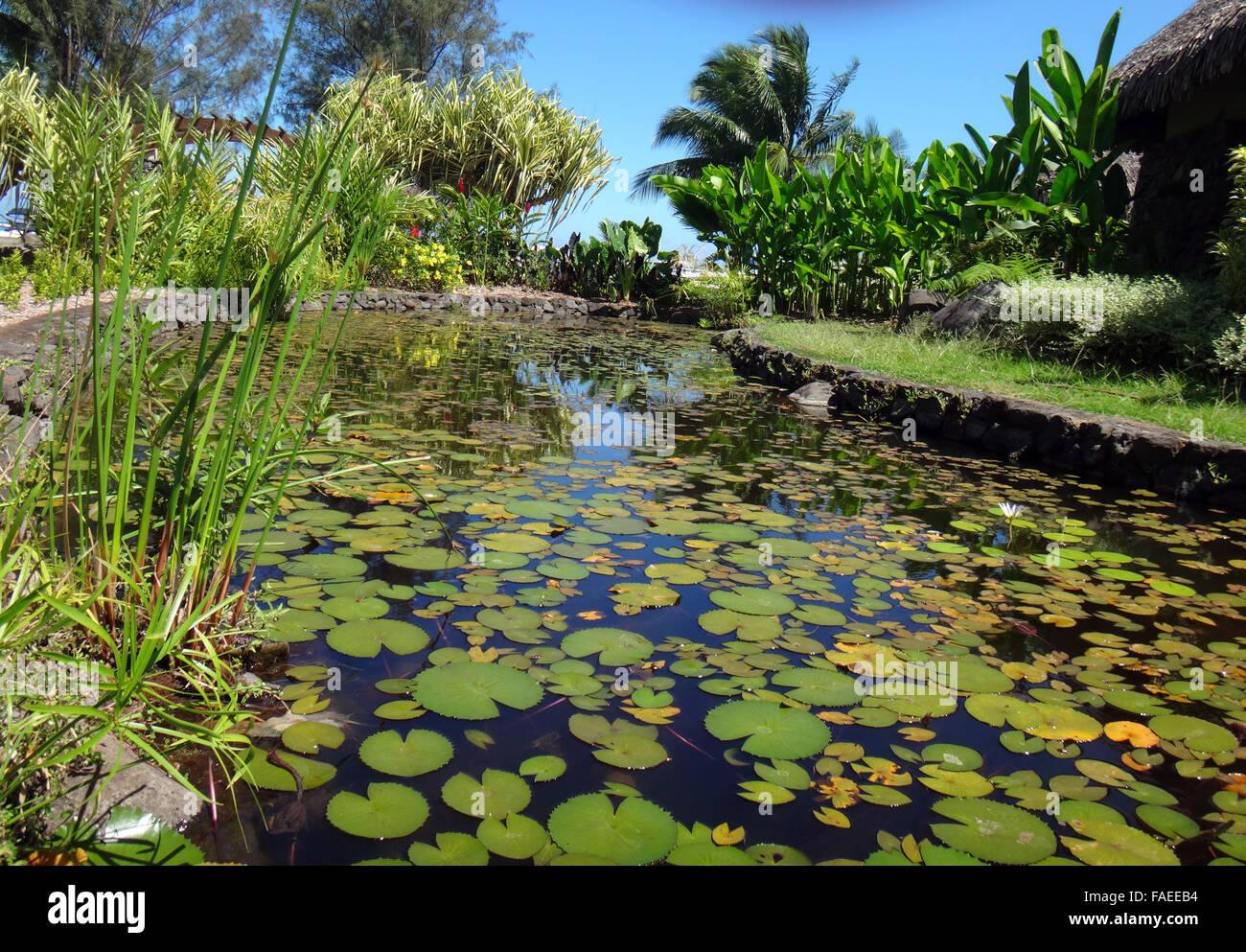 Ornamental fish pond of jardins de pa 39 ofa 39 i garden of for Ornamental pond fish