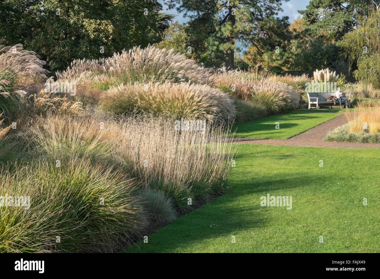 Ornamental Grass Garden Autumn Royal Botanic Gardens