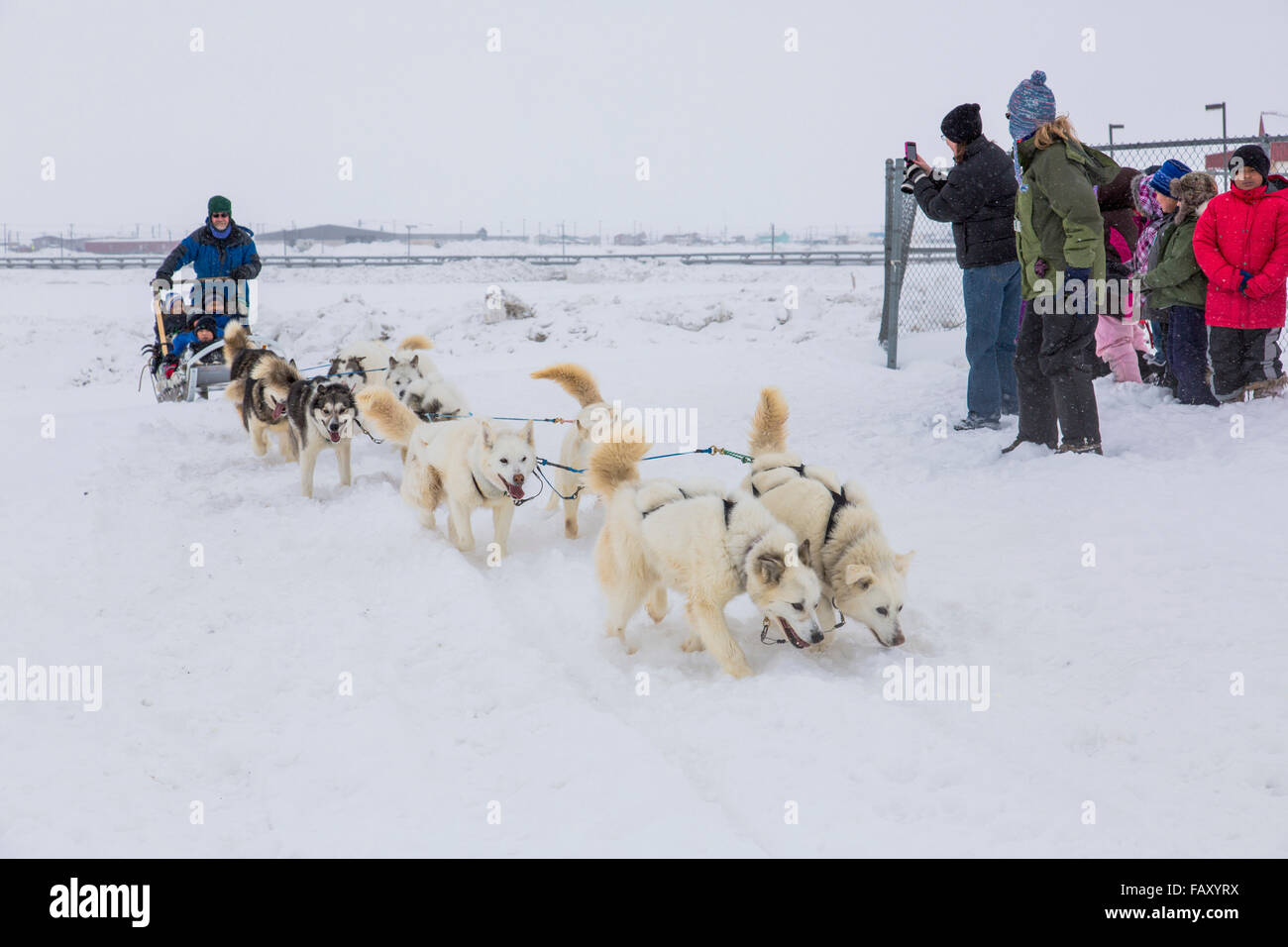 Elementary school children ride a sled pulled by sled dogs ...