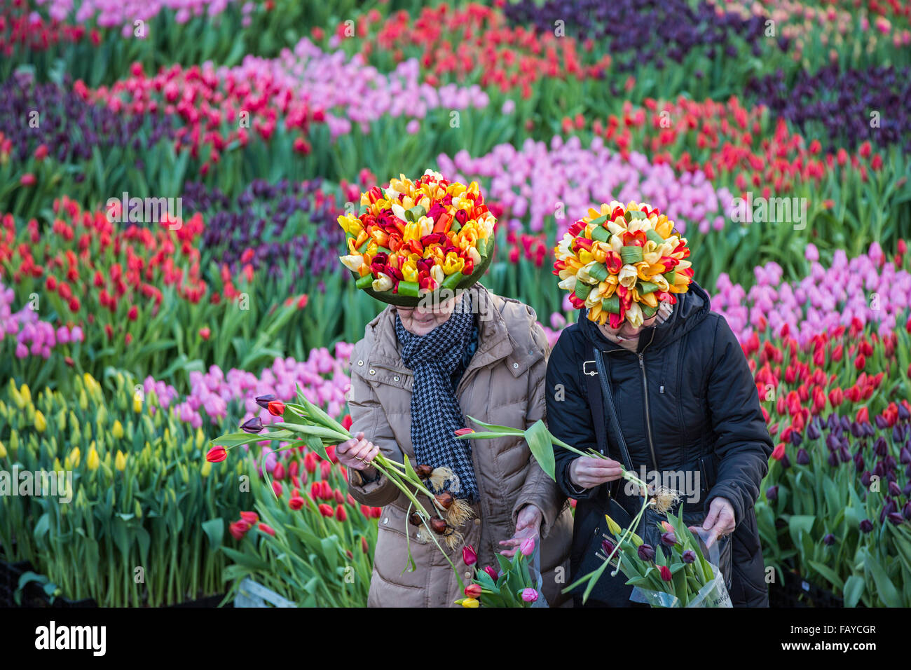 Netherlands amsterdam start tulip season dam square for What season are tulips