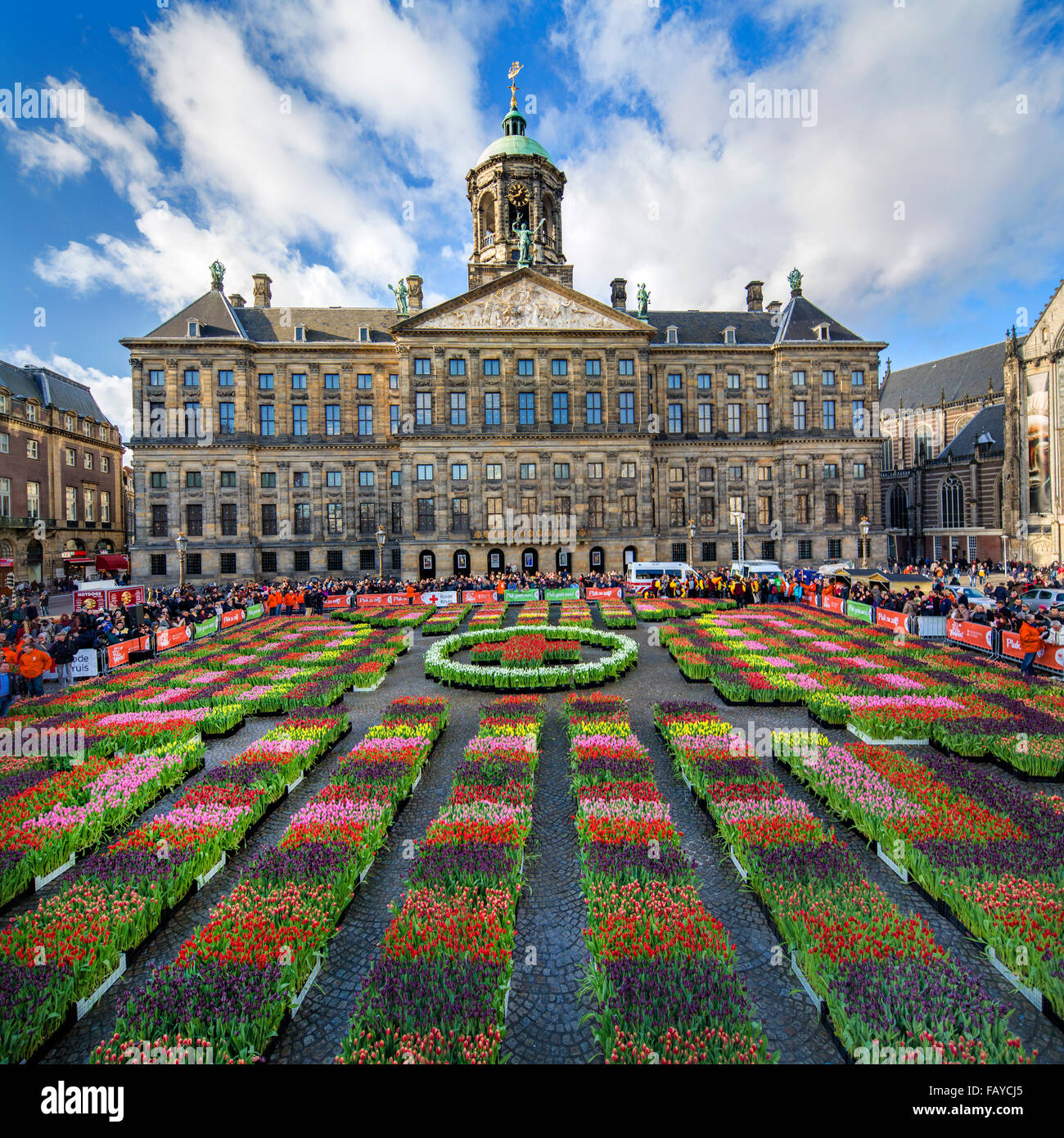 Netherlands amsterdam start of tulip season dam square royal netherlands amsterdam start of tulip season dam square royal palace people can pick the tulips for free national tulip day publicscrutiny Choice Image