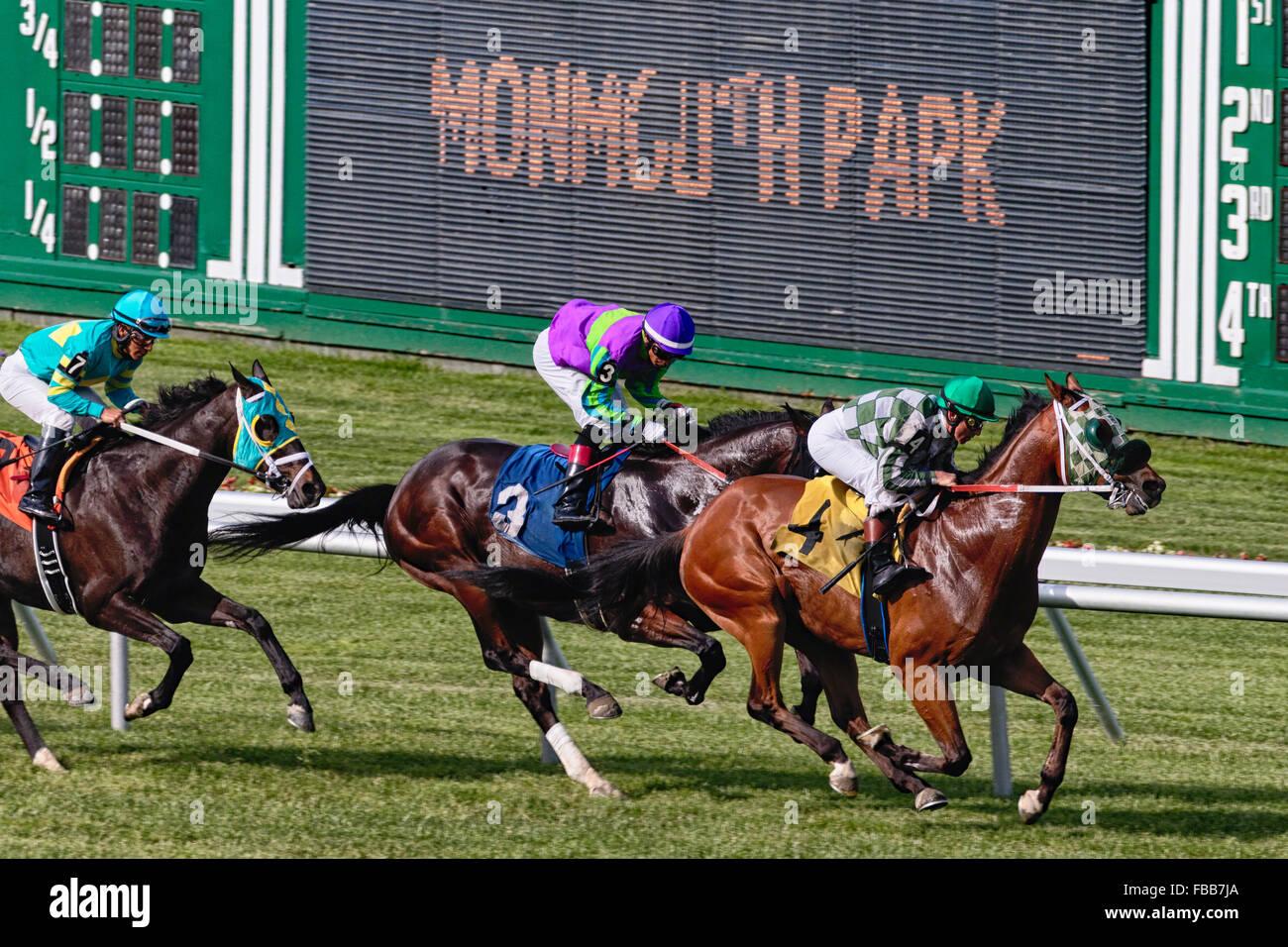 Three Horses with Jockeys Racing at Monmouth Park Race Track Stock
