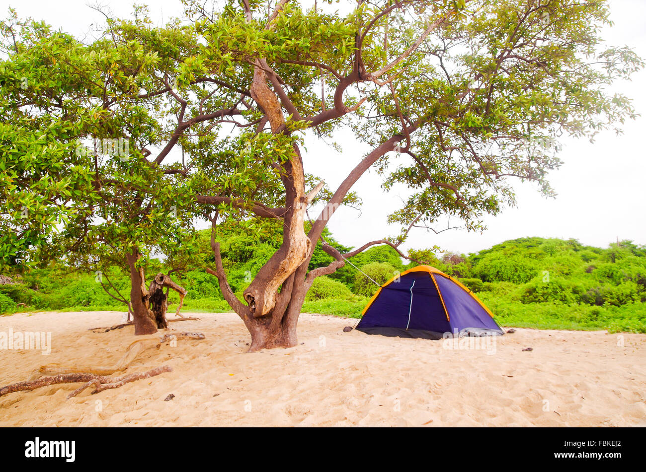 Small c&site with a two person tent setup in sand on beautiful beach pacific ocean background Galapagos Islands Ecuador & Small campsite with a two person tent setup in sand on beautiful ...