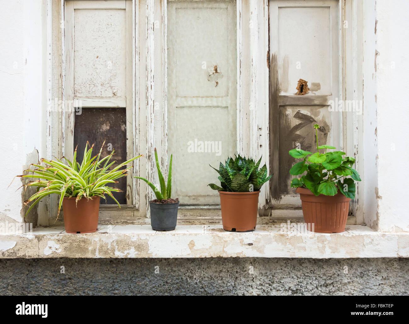 [ window sill plants winter ]