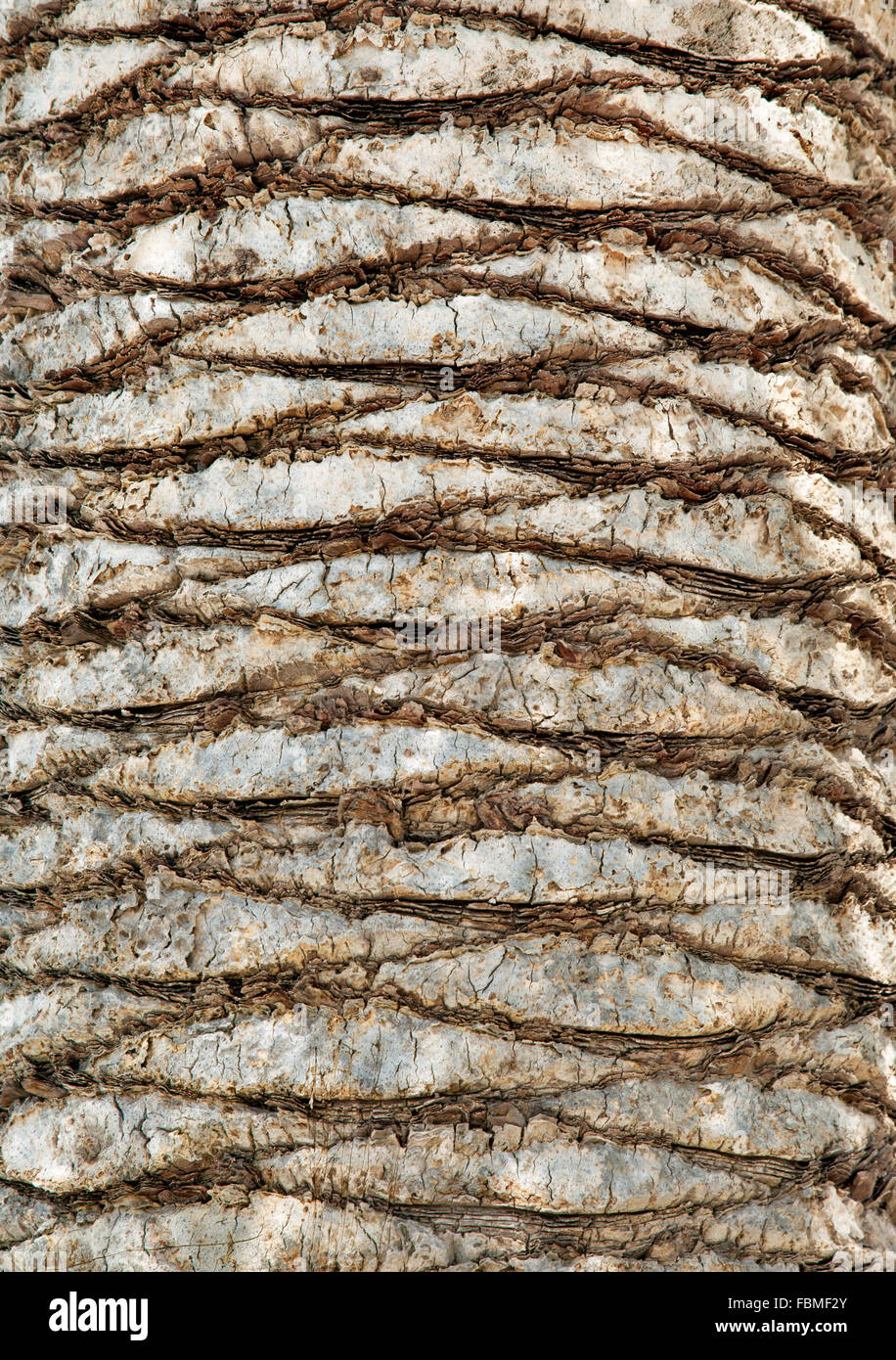 Palm tree bark for texture or background Stock Photo ...