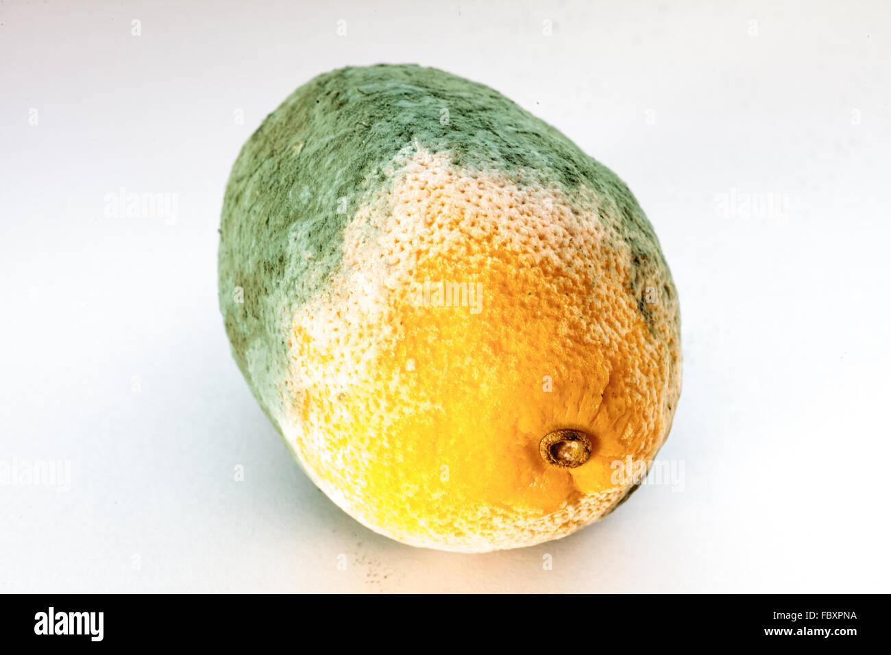 Green Moldy Lemon Citrus Fruit Isolated. Damaged Food. Stock Photo ...
