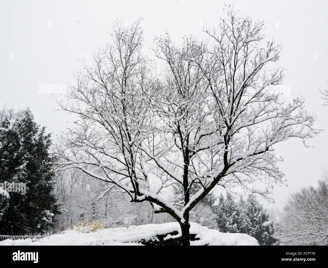 Singles in birch tree missouri