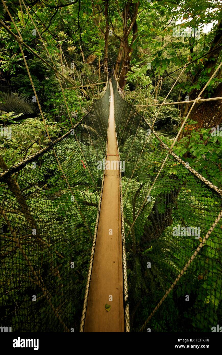 Canopy walk in a rainforest of FRIM in Kepong near Kuala Lumpur Selangor Malaysia & Canopy walk in a rainforest of FRIM in Kepong near Kuala Lumpur ...
