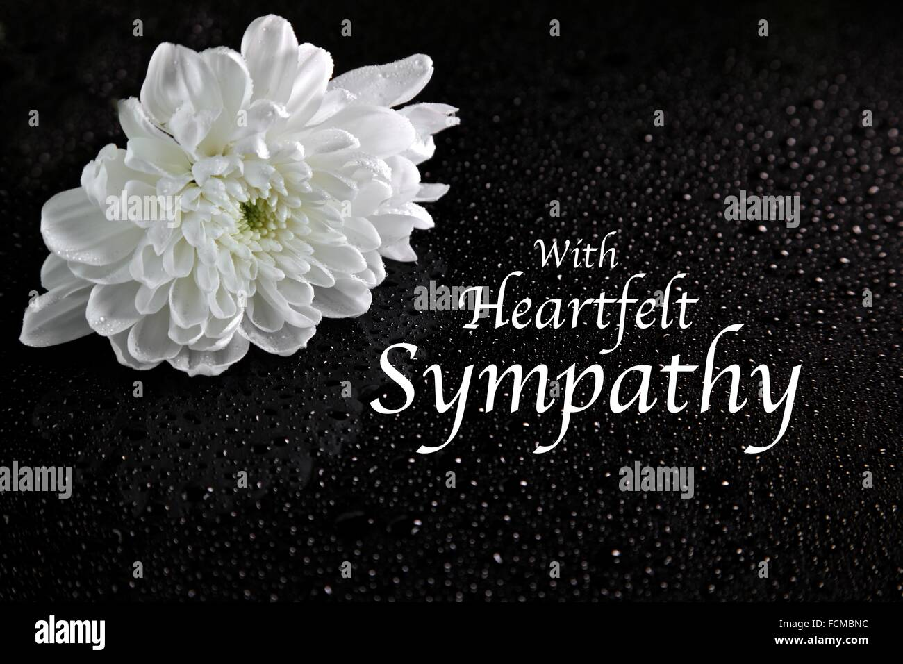 A white Chrysanthemum with sympathy message Photo Royalty – Sympathy Message