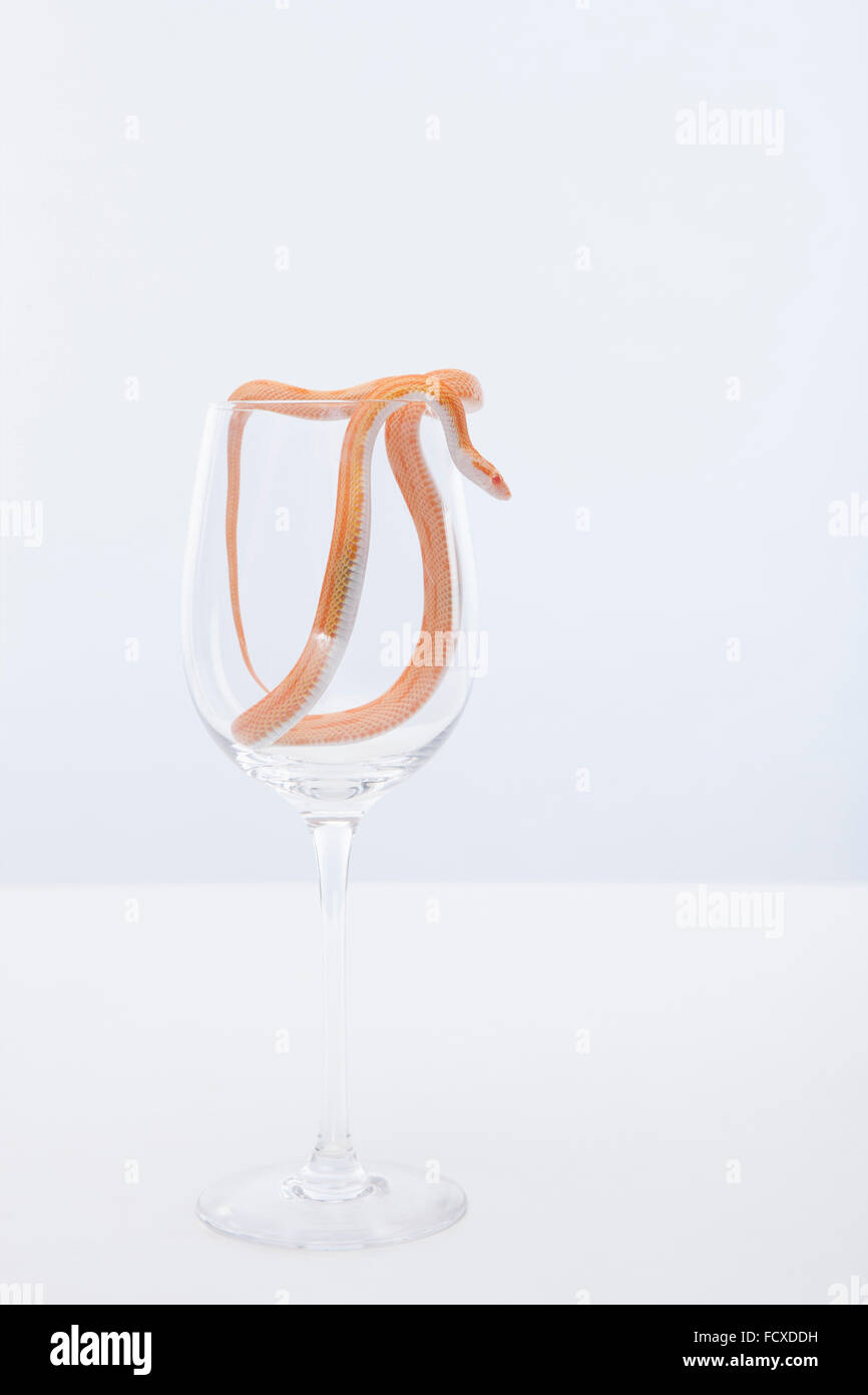 orange color of snake crawling down out of a wine glass stock