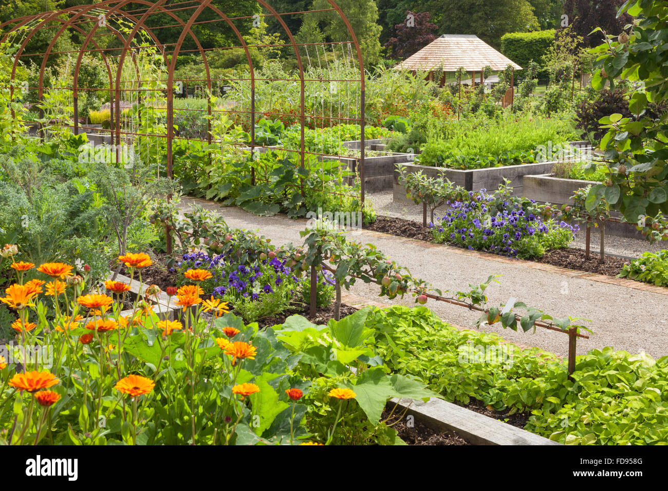 Metal archway climbing frame among raised beds. The