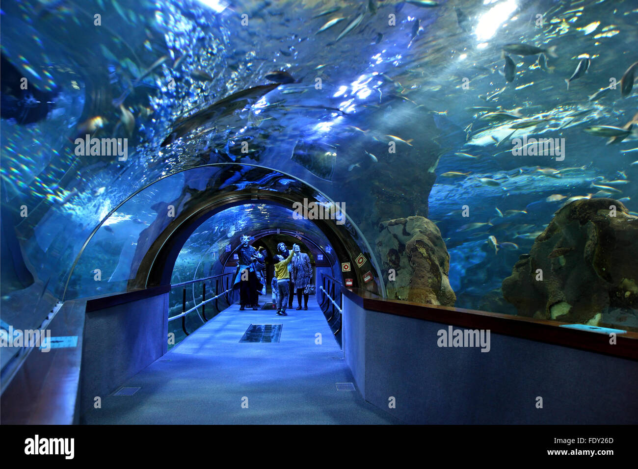 in the aquarium of san sebastian donostia basque country spain stock photo royalty free. Black Bedroom Furniture Sets. Home Design Ideas