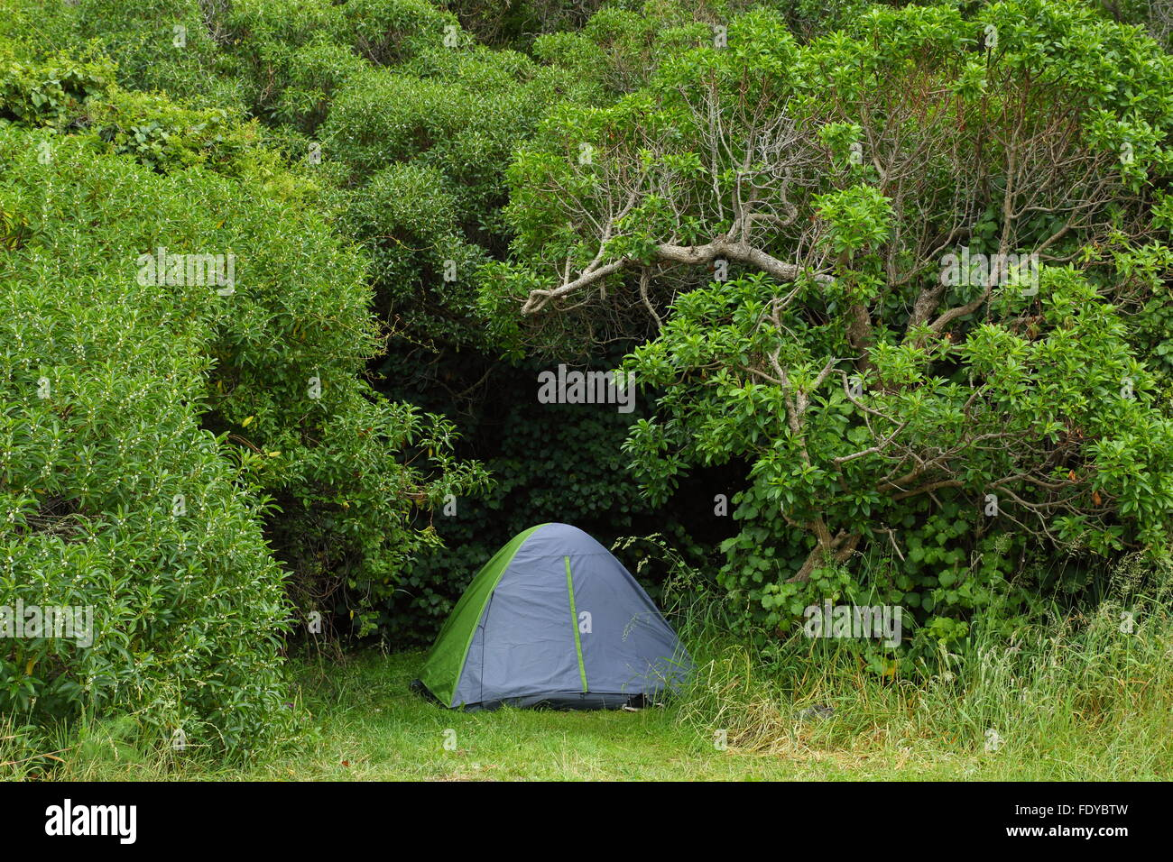 C&ers have chosen a beautiful site to pitch their tent at Half Moon Bay Kaikoura New Zealand & Campers have chosen a beautiful site to pitch their tent at Half ...