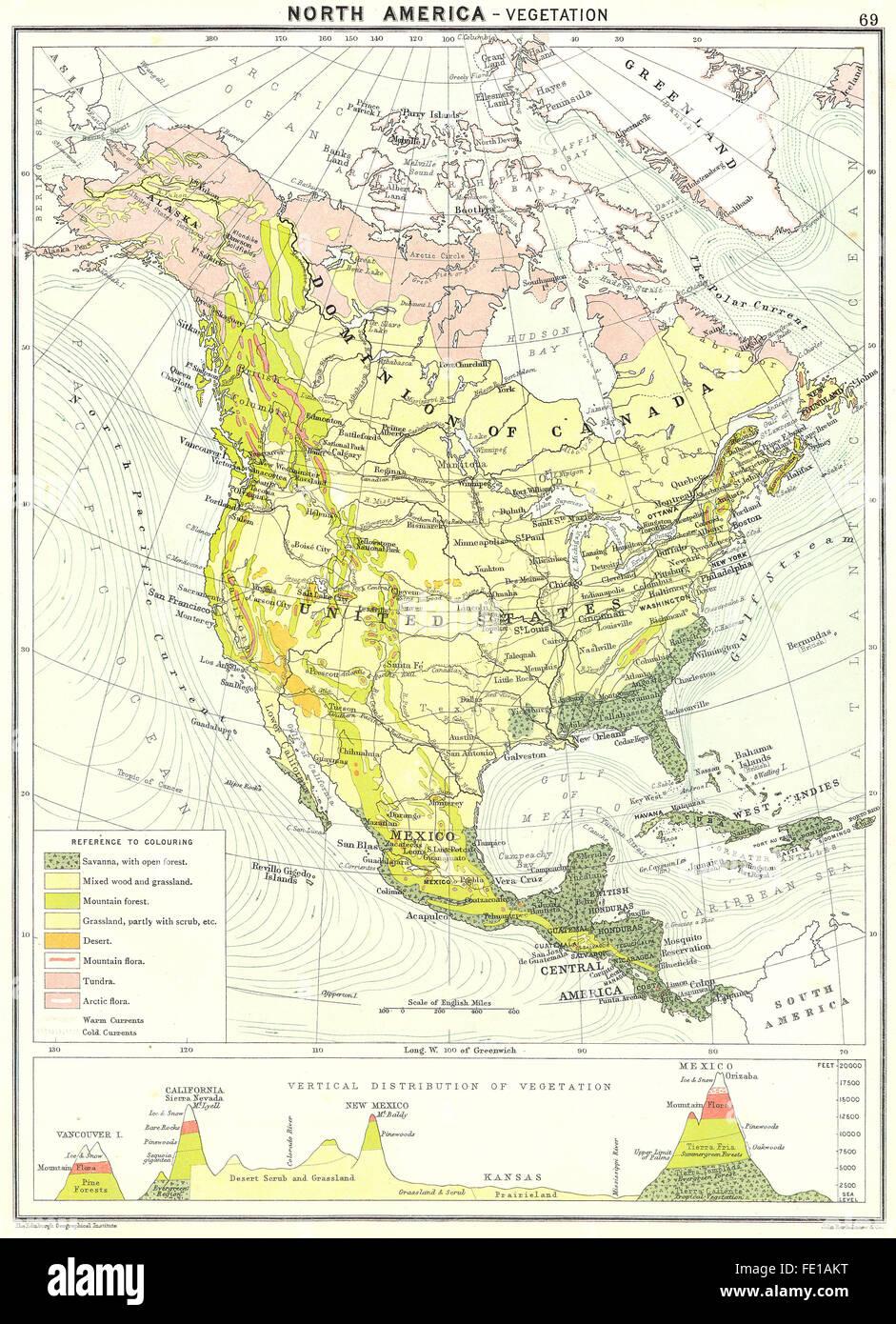 NORTH AMERICA Vegetation 1900 antique map Stock Photo Royalty