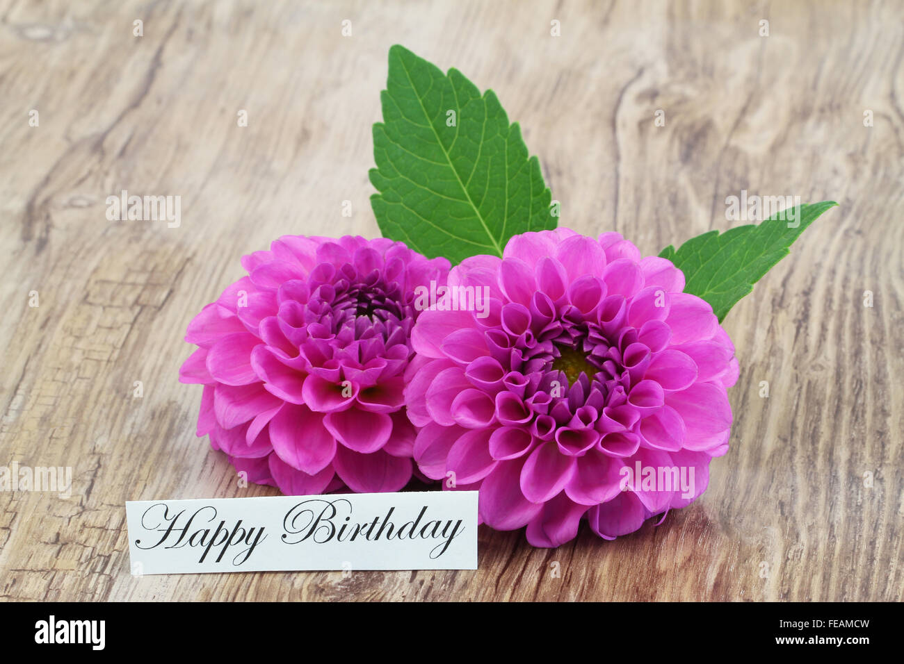 happy birthday card with two pink dahlia flowers stock photo, Birthday card