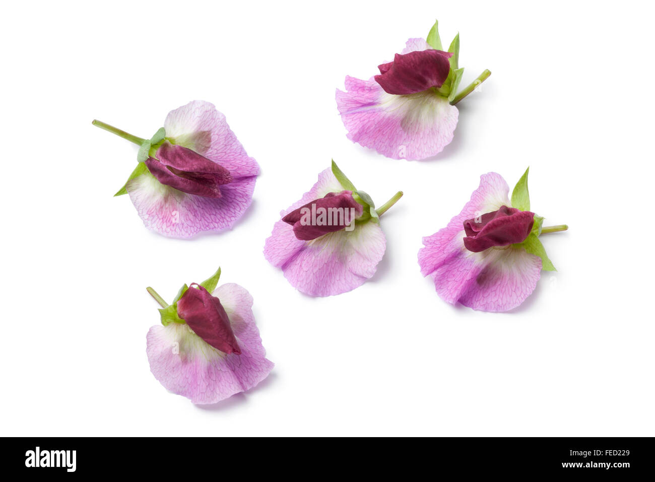 Fresh sweet pea flowers on white background stock photo royalty fresh sweet pea flowers on white background dhlflorist Image collections