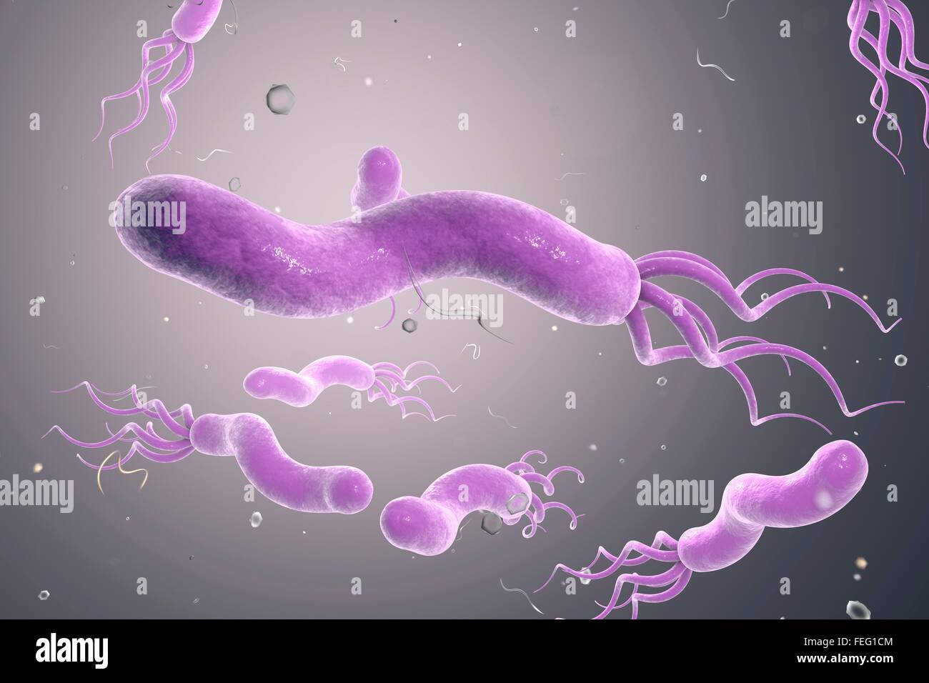 Helicobacter pylori bacterium computer illustration h pylori is a stock photo royalty free - Bacterie helicobacter pylori ...