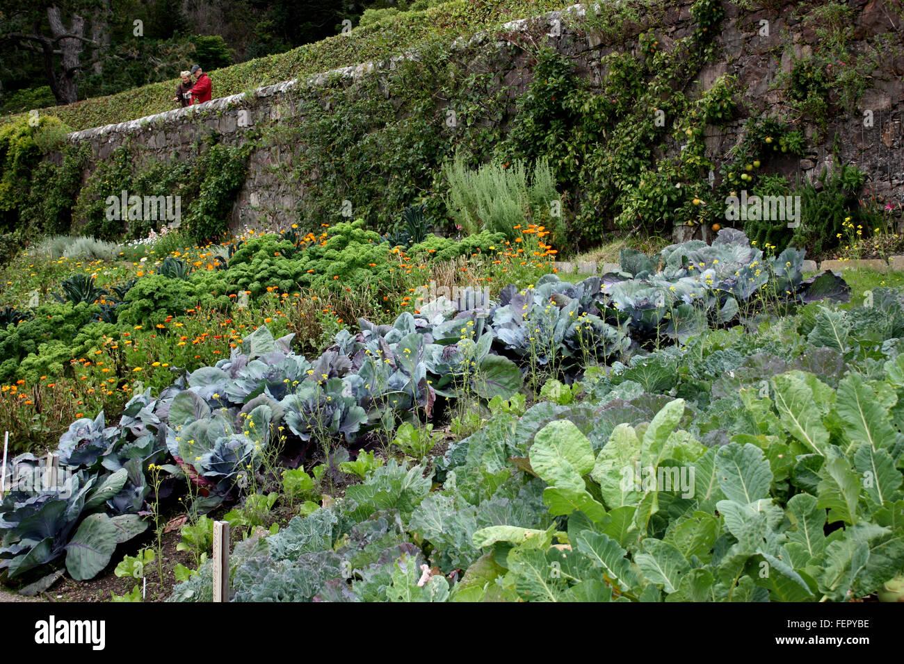 The Vegetable Garden At Inverewe Gardens, Wester Ross, Scotland